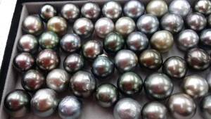 tahitian multicoloured huge pearls